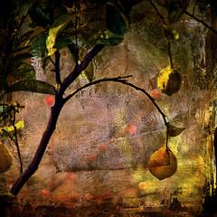 Lemon tree (A look through lens) Tags: italy tree film nature fruit lemon flora europe liguria ektachrome textured lightroom scannedimage contax139quartz iso64 platinumphoto artgalleryandmuseums awardtree 100commentgroup artistictreasurechest musicsbest selectbestfavorites selectbestexcellence yashica200mm sbfmasterpiece magiayfotografia thelittlebookoftreasures