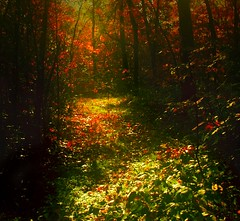 ode to autumn (sole) Tags: autumn trees light red sunlight holland green fall weather yellow forest season colours bosque dreamy bos carmen drenthe solea johnkeats dromerig seizoen carmengonzalez odetoautumn theoriginalgoldseal