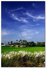 autumn in bengal (Soumya Bandyopadhyay) Tags: blue sky field clouds rural paddy huts clear polarizer bengal westbengal pentaxk100d pentax1855mm kashful