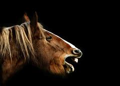 [フリー画像] 動物, 哺乳類, ウマ科, 馬・ウマ, 201102221100