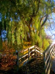 Willows tendrils in soft light (moodyfan (Julie)) Tags: autumn fall soft shadows footbridge softness willow weepingwillow legacy softlight tendrils travelsofhomerodyssey