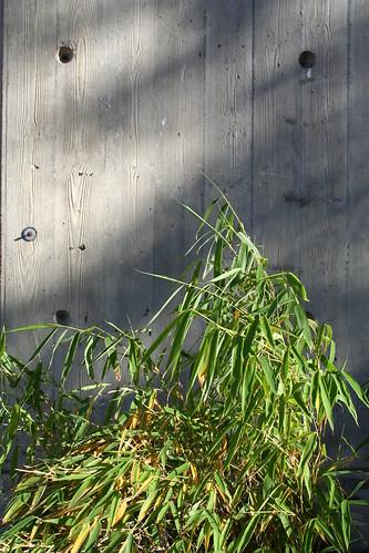 Den skira och förgängliga bambun mot den grå betongmuren. Kanske är det just i kontrasten som skönheten ligger?