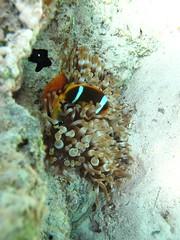 Dahab-20091128-110434 (John Mason) Tags: underwater dahab egypt diving canyon seaocean miragedivers