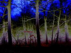 Winter dream (sovcsil) Tags: trees winter forest surrealism impressionism awardtree altrafotografia daarklands
