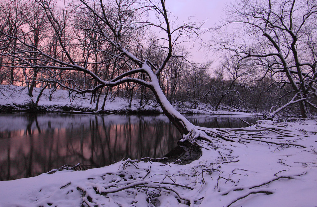 Robinson's Woods, Cook County, Illinois