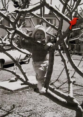 vintage frangipani climbing