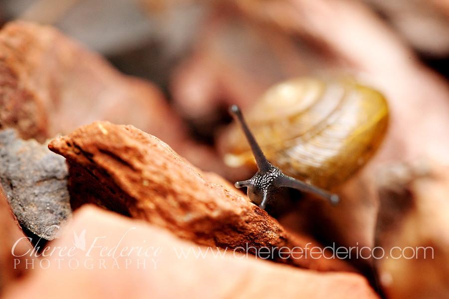 Peeking Snail