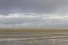 Quatre oies et onze éoliennes (2010kev) Tags: hoylake thewirral