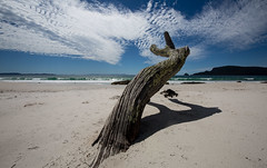 in the middle of a dream (Keith Midson) Tags: brunyisland tasmania tree sand beach summer clouds water ocean coastal coastline coast shore seascape australia
