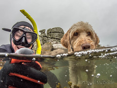 2017 Kian Fern Camel 2 (davidmcbridephotography) Tags: labradoodle dog snorkeller swimmer camel spilt shot sea united kingdom cornwal isles scilly scillies boy wetsuit seaweed exhilerating cold freezing loade porthellick beach adventure granite awesome fun moment son pooch clear sharp nikon nauticam zen laugh laughter happy extatic humerous kids family orange travel