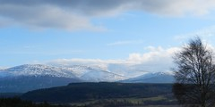 Cairngorm Mountains from the Highland Wildlife Park, Kincraig, Feb 2017 (allanmaciver) Tags: cairngorm mountains national park highland wildlife snow view tree shadows clouds shades dark blue sky weather colder allanmciver