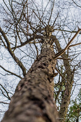 20170225_114659_3500-300_0022 (Olivier_1954) Tags: charleroi 06000000 06006000 06006003 couillet environnement forêts iptcnewscodes iptcsubjects ressourcesnaturelles bois environmentalissue forests naturalresources wallonie belgique be