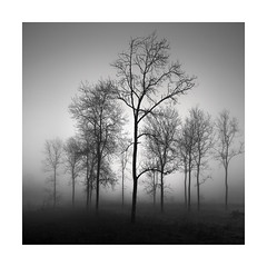 Protected (Nick green2012) Tags: trees mist woodland square blackandwhite minimal landscape moody