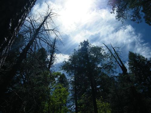 Mt Lemmon - Tucson, Arizona