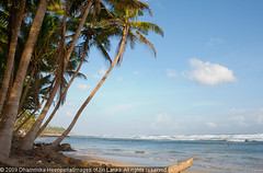IMG_7467 (Dhammika Heenpella / Images of Sri Lanka) Tags: travel vacation holiday travelling tourism beach coast interesting scenery asia south southern coastal srilanka southeast lk downsouth holidaying scenicbeauty weligama placesofinterest photosof southernprovince dhammikaheenpella theimagesofsrilanka heenpalla visitsrilanka2011