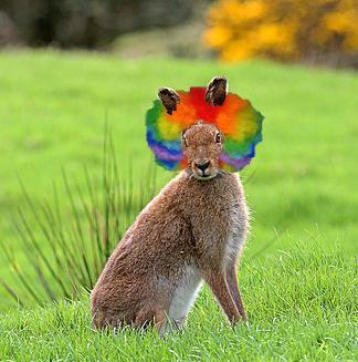 wild hare, wild hair
