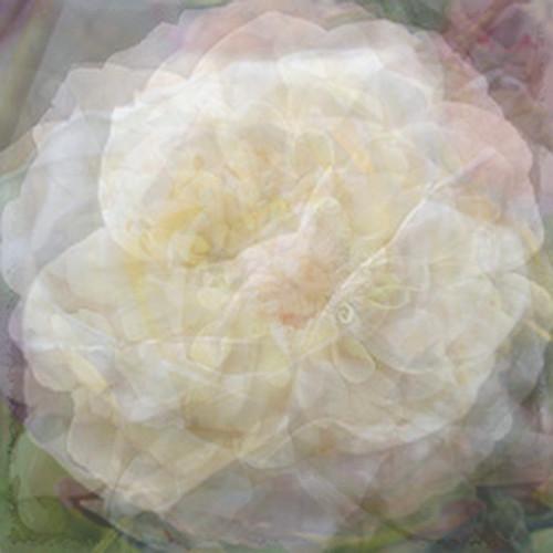 A Dozen White Flowers (Explored!)