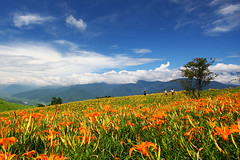 (nodie26) Tags: flower landscape taiwan   hualien    yellower