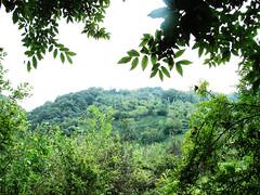 Green roof (mohsen8886) Tags: greenroof northofiran lahijan