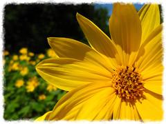Flower Victory