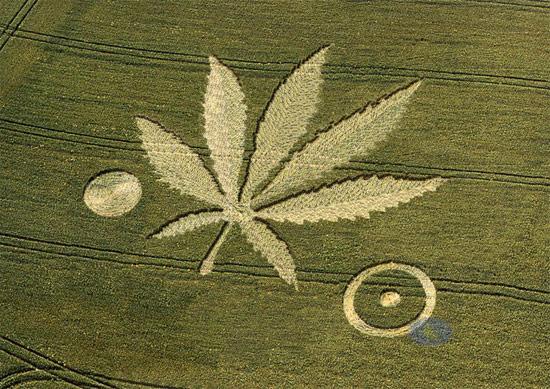 crop-circles-field-photo-10
