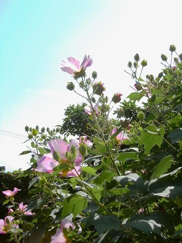 Flower-046