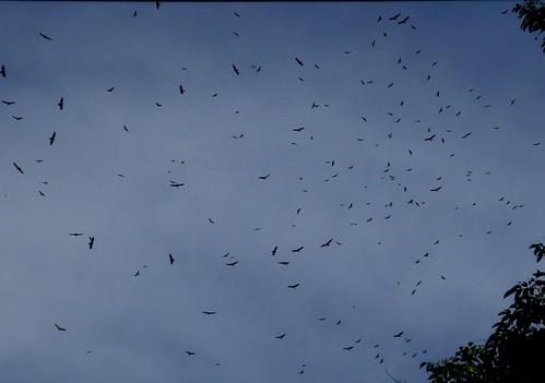 Miles de gavilanes