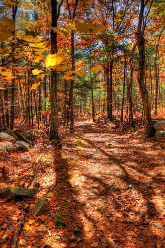 Hopkinton State Park Autumn Foliage HDR Trail Photos