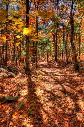 Hopkinton State Park Autumn Foliage HDR Trail Photos