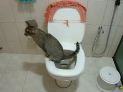 Meninas, vcs que gostam de gatinhos vão adorar !!! Vale muito apena assistir... (soniapatch) Tags: gatos gatodofuturo evoluçãodosgatos