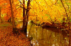 bevere di Brianza's creeks (Marsala Florio) Tags: autumn friends italy fall yellow italia amarillo giallo autunno brianza lombardia otw inspiredbylove mycameraneverlies clickcamera flickrlovers oneofmypics