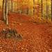 Falls: November 05