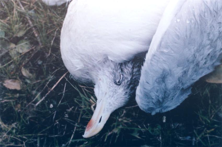 seagull_1