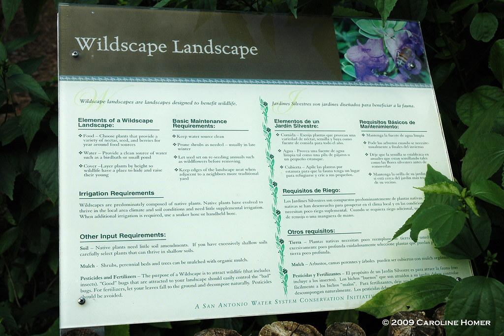 Wildscape Landscape