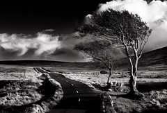The Sally Gap, Co Wicklow, Ireland. (2c..) Tags: road autumn ireland sky bw mountains tree 20d skyscape landscape images explore getty wicklow 2c licensed 72dpipreview lowresolutionpreview 2c