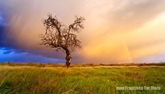 Hyrule Field (Muchilu) Tags: iris winter storm arcoiris rainbow nikon autum d sigma ibiza tormenta eivissa 1020 90 arco d90 polarizador muchilu muchilujuanfcoturriera murdokdiceputuxd