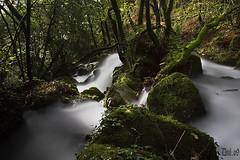Sesn, milk river (puentebello) Tags: longexposure nature water ro forest river agua galicia auga acapela acorua nd400 fragasdoeume mazoca sesn