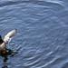devendra banhart:bluebird