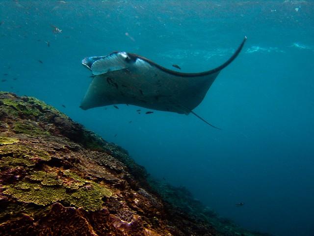 Nusa Penida Lembongan Diving