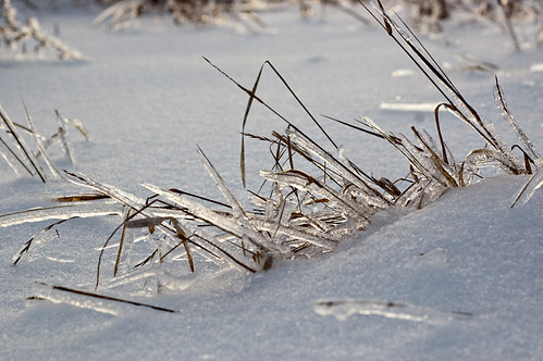 341:365 Icy grass