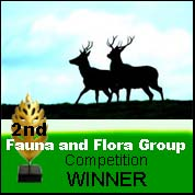 Fauna & Flora Group White text Competition 2nd Place