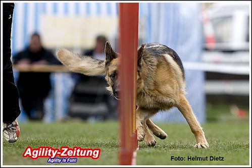 09-Kady, DSH Deutscher Schäferhund