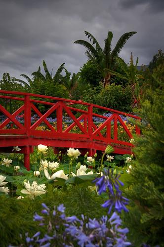 Blue Lotus Water Garden (24)