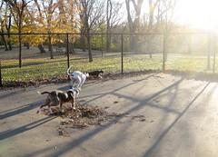 Run for Daylight (corydalus) Tags: dog greyhound speed hound running gallop greyhounds