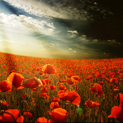 ~ the magical field ~ (~ Pixel Passion ~) Tags: flowers blue light red sky sun white flower nature colors field clouds landscape spring shiny colorful warm mood moody colours dof shine natural magic meadow atmosphere sunny poppy poppies colourful sunrays magical atmospheric springlike width