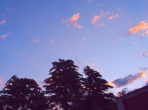 Dawn, with White Pines, July 1, 2009