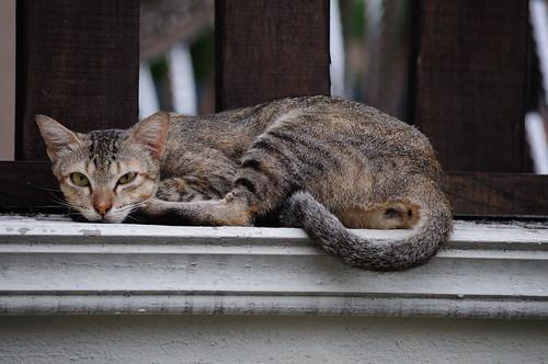 Cat on ledge (ISO 1000) -- DSC_4312