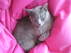 pink og gr (Sakena) Tags: cat myfavorite rosin bestofcats