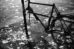 if only the parts grew back like the leaves do (clickykbd) Tags: street city travel bw italy fall film leaves bike bicycle silhouette night canon season 50mm mono cycling florence missing italia alone lock decay 14 delta 1600 chain transportation tuscany biking clickykbd firenze a1 toscana decrepit damaged ilford 2007 fd sopahide