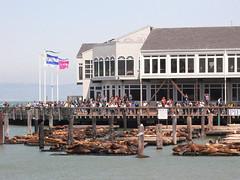 Fisherman's Wharf (waterloosunset) Tags: sf sanfrancisco trip cold hotel tea windy haight goldengate bayarea mission sanfran 2009 samovar mosser theybay